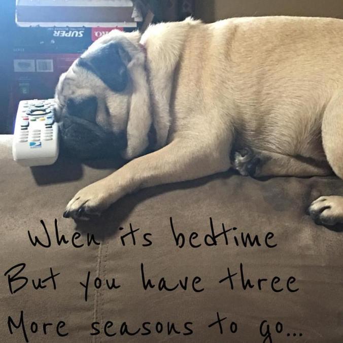 Pug Bedtime